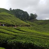 Südostasien - Malaysien - Cameron Highlands